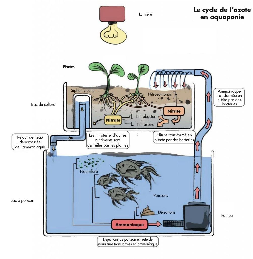 aquaponie